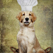 Golden Chef Poster by Susan Candelario