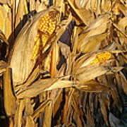 Golden Corn Poster