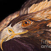 Golden Eagle Close Up Painting By Carolyn Bennett Poster
