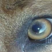 Golden Eye Of Norbu 12 18 2011 Poster