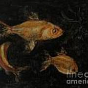 Golden Fishes Poster