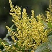 Golden Flora 2013 Poster