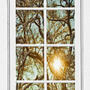 Golden Forest  Branches White 8 Windowpane View Poster