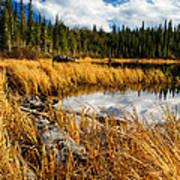 Golden Grass At Red Rocks Lake Poster
