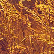 Golden Grass  Poster