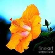 Golden Hibiscus Poster