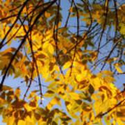 Golden Leaf Cascade Poster