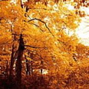 Golden Leaves 2 Poster by Jocelyne Choquette