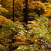 Golden Leaves In Autumn Poster