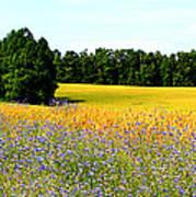 Golden Meadow Poster
