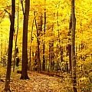 Golden Path Poster
