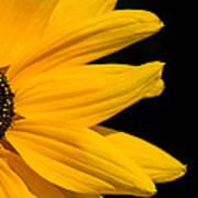 Golden Petals Poster