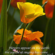 Golden Poppy Floral  Bible Verse Photography Poster