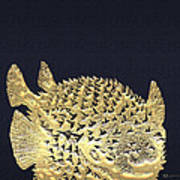 Golden Puffer Fish On Charcoal Black Poster