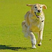 Golden Retriever Running On A Green Poster