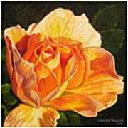 Golden Rose Blossom Poster