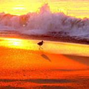 Golden Beach Poster