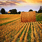Golden Sunset Over Farm Field In Ontario Poster
