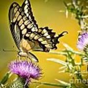 Golden Swallowtail Poster