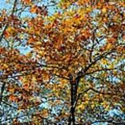 Golden Tree Lined Sky Poster