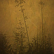 Golden Trees In Winter Poster