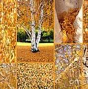 Golden Weeping Birch Tree Collage Poster