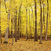 Golden Woods Poster