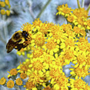 Golden Yarrow And Visitor Poster
