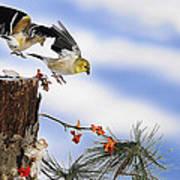 Goldfiches Flying Over Lichen Stump Poster
