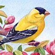 Goldfinch In A Crab Apple Tree Poster