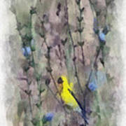 Goldfinch In Wildflowers Poster