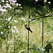 Goldfinch On The Lookout -19 Poster