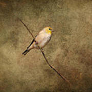 Goldfinch Portrait Poster