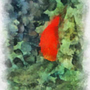 Goldfish Photo Art 04 Poster