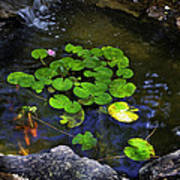 Goldfish With Lily Pads Poster