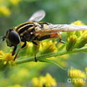 Good Guy Hoverfly  Poster