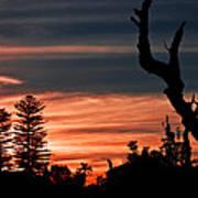 Good Night Trees Poster