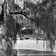 Goose Pond Poster