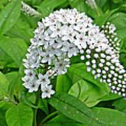 Gooseneck Flower Poster by Aimee L Maher Photography and Art Visit ALMGallerydotcom