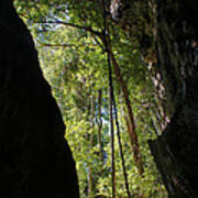 gorge in the Tsingy de Bemaraha Madagascar Poster