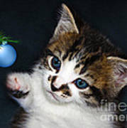 Gorgeous Christmas Kitten Poster