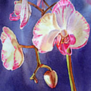 Gorgeous Orchid Poster