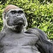 Gorilla Look Poster