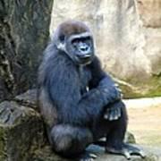 Gorilla Smile Poster