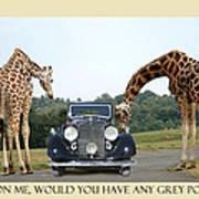 Got Grey Poupon Poster