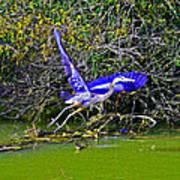 Gr8 Heron Flight Poster