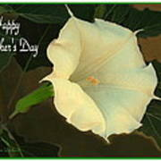 Graceful Moonflower - Happy Mother's Day Poster