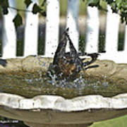 Grackle In The Bird Bath 3 Poster