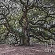Grand Angel Oak Tree Poster