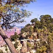 Grand Canyon 40 Poster